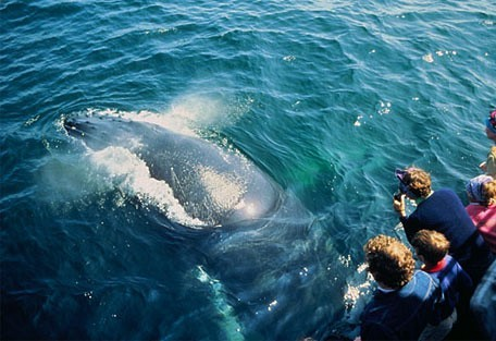 456_whaleroute_whale_view.jpg