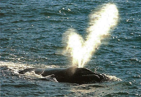 456_whaleroute_blow_hole.jpg