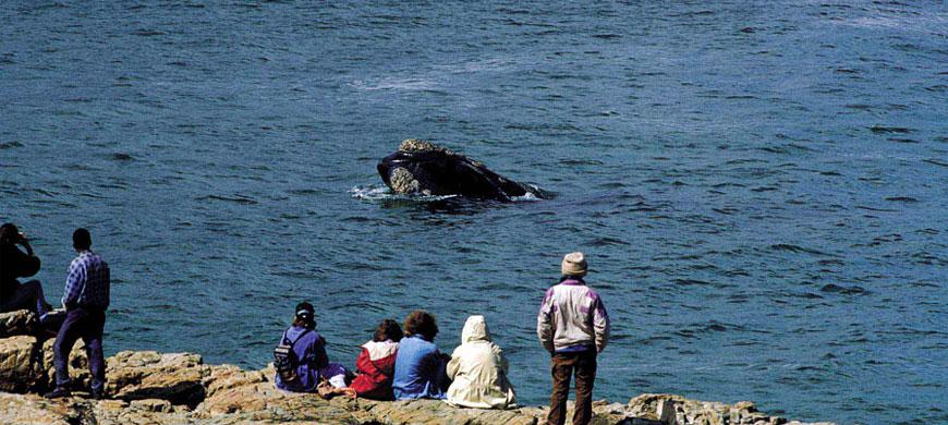 870_auberge_whalewatching.jpg