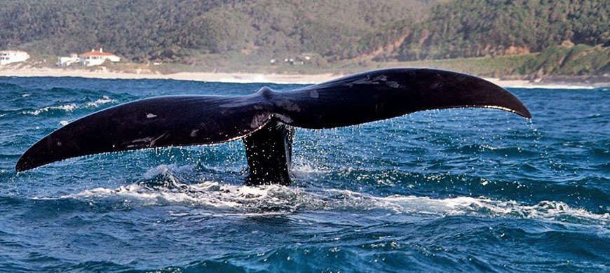 870_oceaneleven_whaletail.jpg