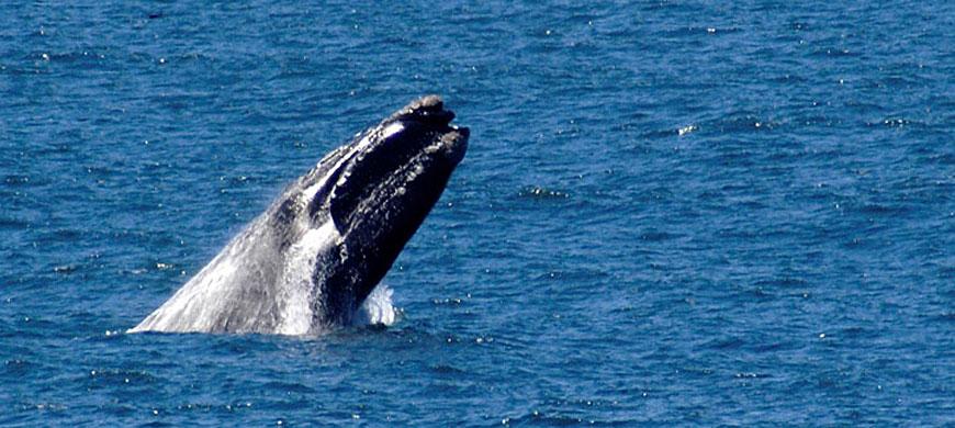 870_marine_whale.jpg