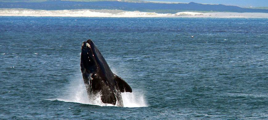 870_villaparadisio_whale.jpg