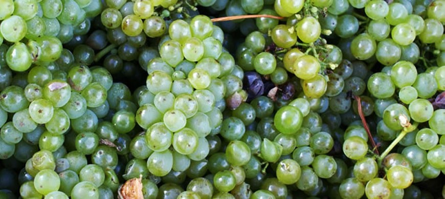 grapes_green.jpg