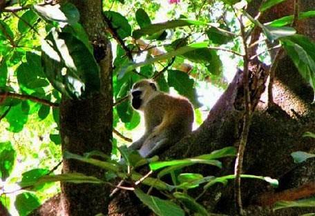 03-monkey.jpg