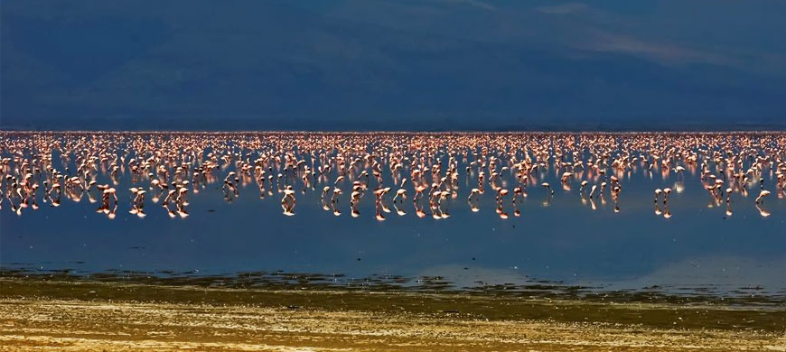 870_impala_flamingos.jpg