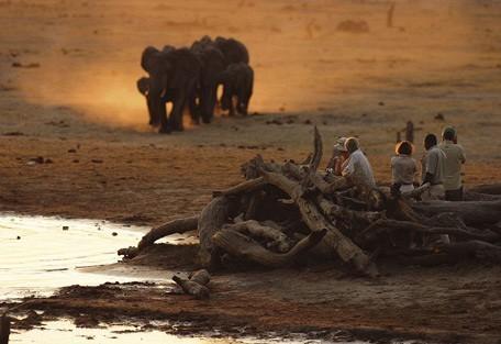 botswana-savuti-elephants.jpg