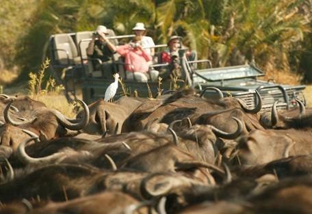 buffalo-drive2.jpg
