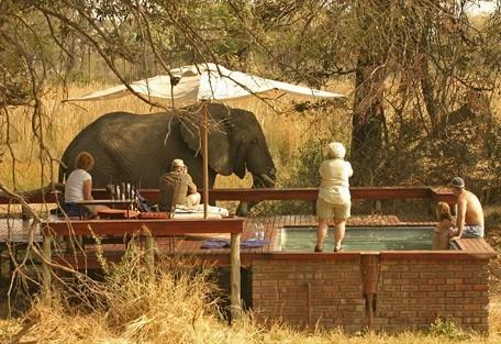 elephant-pool.jpg