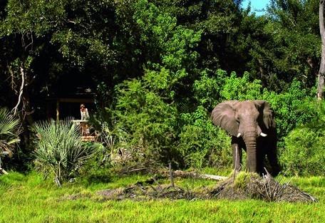 elephant-xigera.jpg
