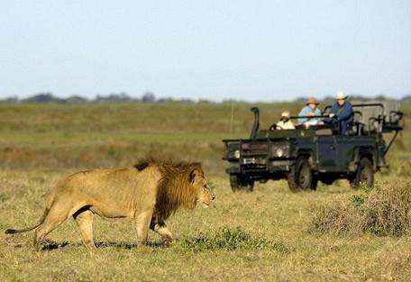 lion-drive.jpg