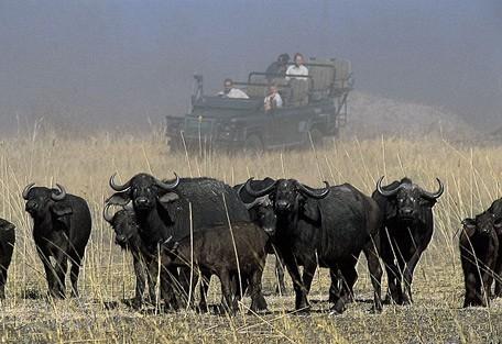 buffalo-drive.jpg