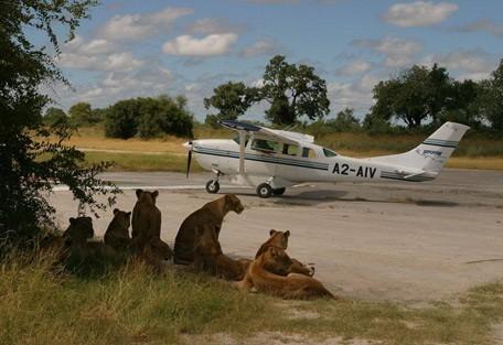 lions-light-air.jpg