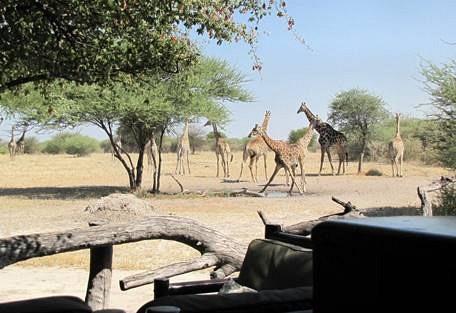 sunsafaris-5-haina-kalahari-lodge.jpg