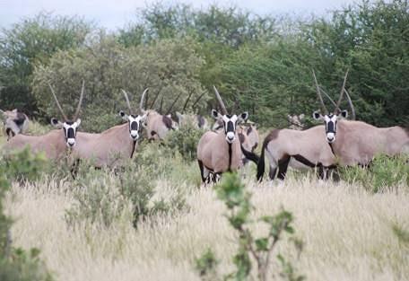 sunsafaris-6-haina-kalahari-lodge.jpg