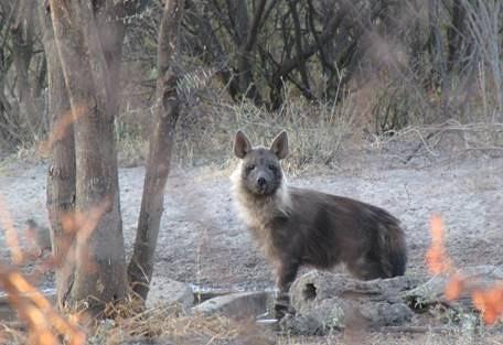sunsafaris-8-haina-kalahari-lodge.jpg