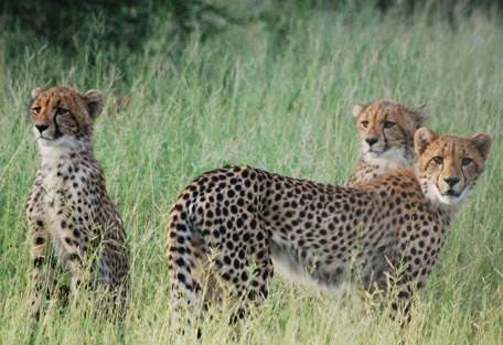 sunsafaris-7-haina-kalahari-lodge.jpg