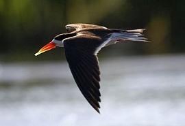 chobe-bird.jpg