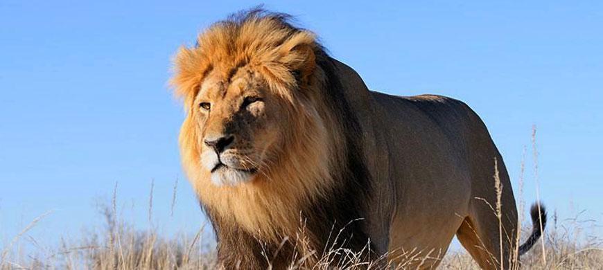 870_unionsend_lion.jpg