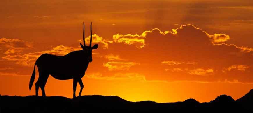 870_kgalagadi_sunset-gemsbok-kgalagadi.jpg