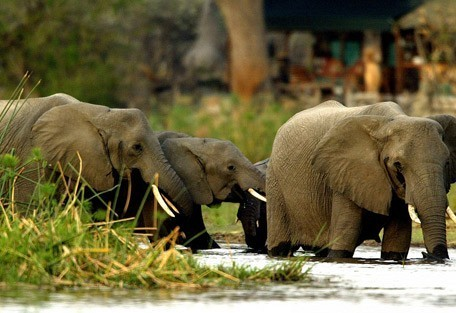 elephant3-linyanti.jpg