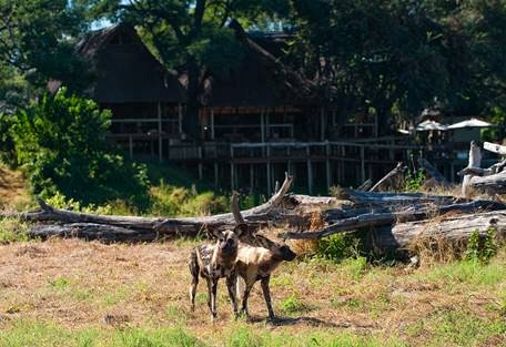 sunsafaris-14-savuti-camp-widlerness-safaris.jpg