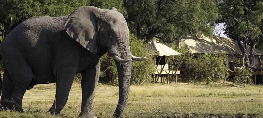 elephant6-linyanti.jpg