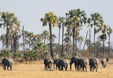 elephant-pans.jpg