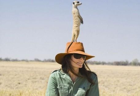meerkats-standing-up.jpg