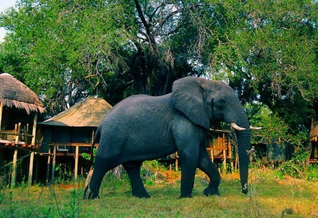 elephant-mombo.jpg