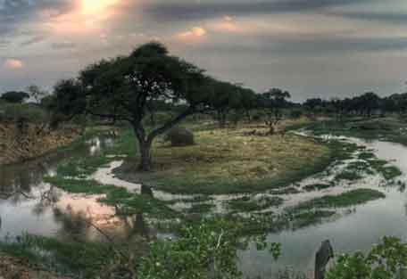 sunsafaris-nokanyana-camp-456-4.jpg