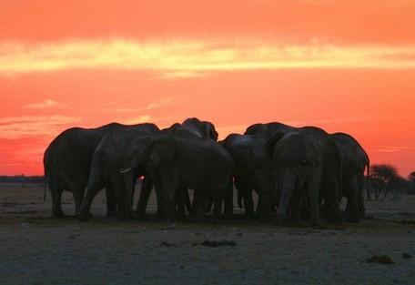 elephants-huddel.jpg