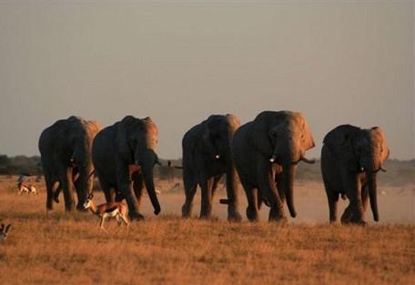 nxai-boys-elephants.jpg