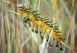 birds-okavango.jpg