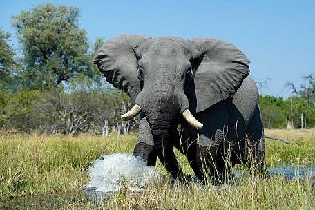 Banoka-Bush-Camp-Elephant.jpg