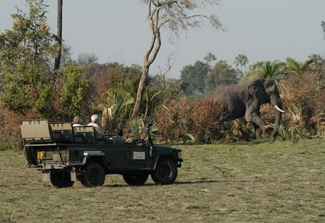 elephant-drive.jpg