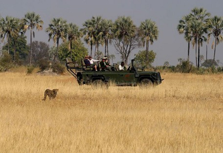 cheetah-drive.jpg