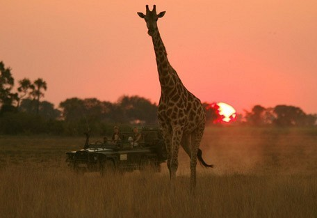 giraffe-drive.jpg