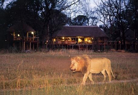 lion-camp.jpg