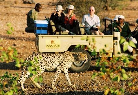 drive-cheetah.jpg