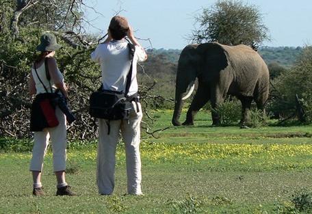 walk-elephant.jpg