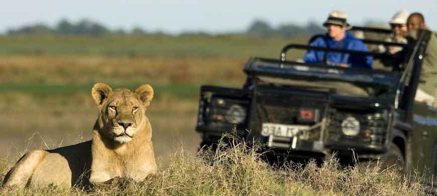 1-botswana-lioness.jpg