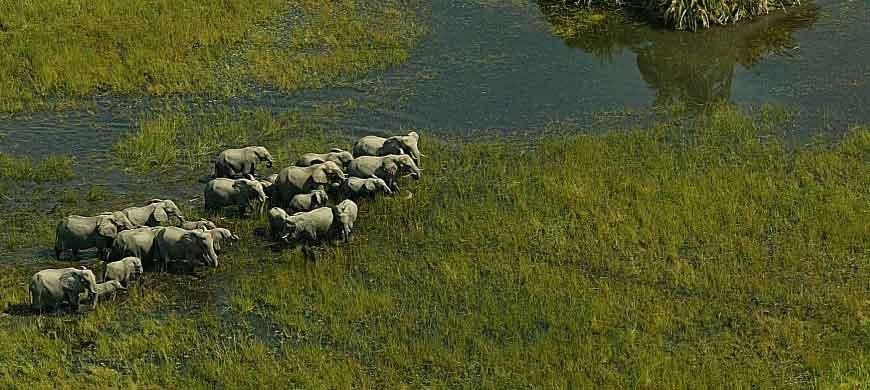botswana-aerial-elephants.jpg