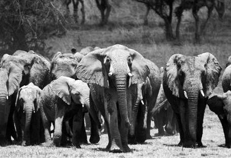 kenya-elephant.jpg