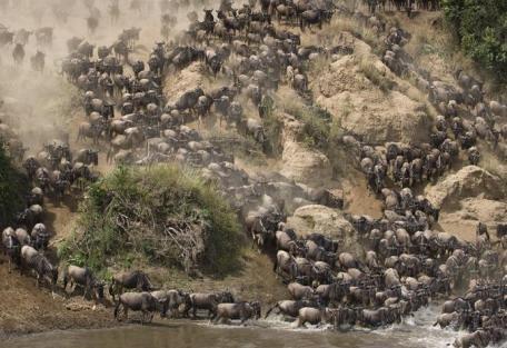 kenya-migration.jpg
