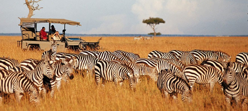 zebras_1.jpg