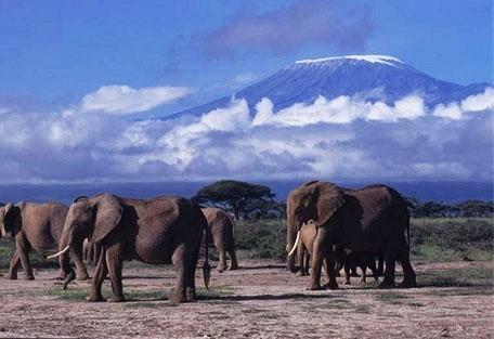 elephant_kili.jpg