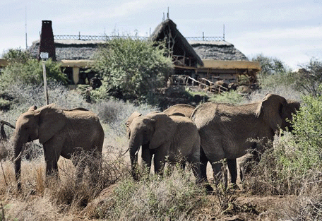 456h_satao-elerai-safari-camp_elephants-tent.jpg