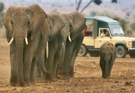 07-game-drive-with-elephant.jpg