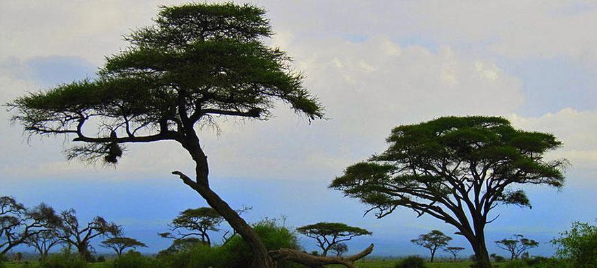 800px-Amboseli_National_Par.jpg