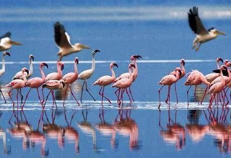 navisha-flamingo.jpg